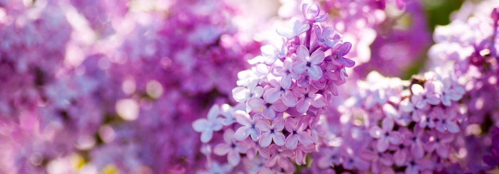 Milestones, Markets, and Lilacs!